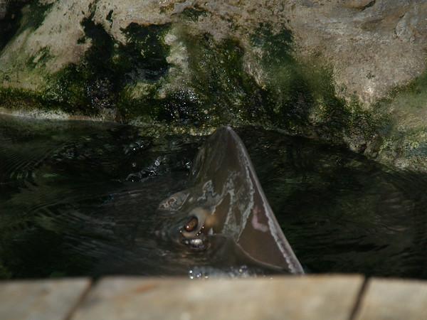 Tn Aquarium Jan 08